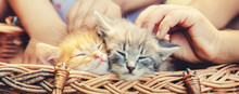 Little Kittens In The Hands Of...
