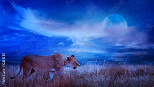 Lion female in the African savannah. Moonlight night african landscape. Africa, Tanzania, Serengeti National Park. Wild life of Africa.