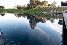 Infinity Pool On A Vineyard - With Dog, Ultra Luxury