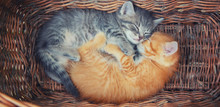 Little Kittens Are Gray And Re...