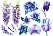 Blue And Purple Flowers On A W...