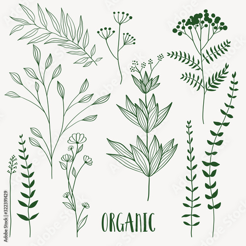 Plant nature hand drawn set. Collection botanical element.