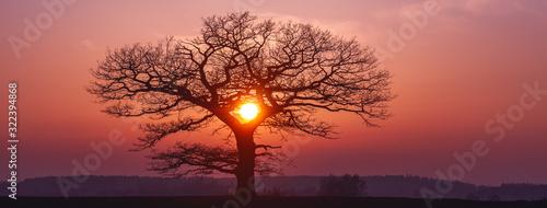 Fototapeta Oak tree silhuette with red sunset in the horizon, banner obraz