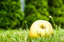 Closeup Shot Of An Apple On A ...
