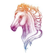 Portrait Of Horse. Vector Animal Head. Symbol Of Sport Cometition, Farm, Exhibition.