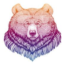 Grizzly Bear. Big Wild Animal ...