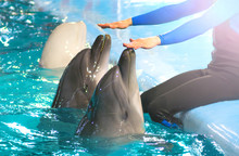 Dolphinarium. Funny Dolphins T...