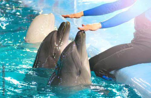 Dolphinarium Canvas-taulu