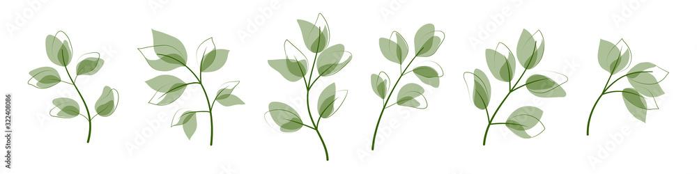 Fototapeta Beautiful  leaves isolated on white background.  Vector illustration. EPS 10