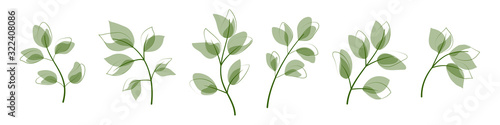 Beautiful leaves isolated on white background. Vector illustration. EPS 10