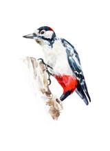 Big Woodpecker Sits On A Stump