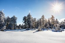 Winter Landscape At Hornisgrin...