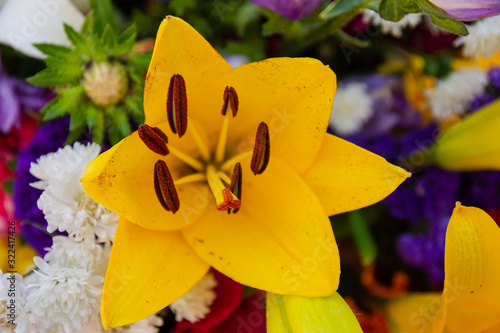 Photo Anther of a Yellow flower