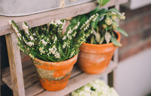 Flowers In Florist Shop With Bouquets, Potted Plants And Garden Accessories