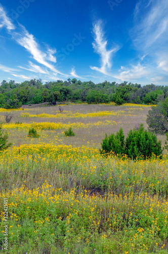 Yellow High Mountain Meadow in Spring