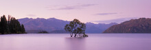 That Wanaka Tree At Sunset, La...