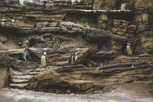 Cute Penguins Standing On The ...