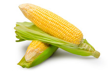Sweet Corns Isolated On White With Clipping Path.