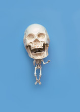 Strange Skeleton With Big Head And Small Body On Blue Background. Creative Minimal Concept. Flat Lay. Copy Space