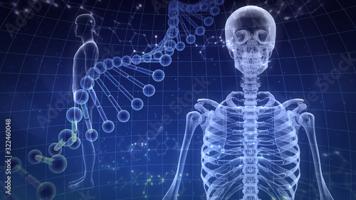 Fototapeta Human Body Skeleton Medical DNA Science Technology 3D illustration background