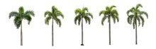 Ten Palm Trees On A White Background.