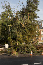 Tree Uprooted By The Storm