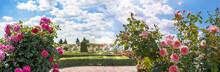 Roses Garden In Sunny Summer D...