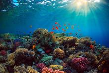 Coral Reef With Fish Underwate...