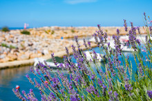 Lavender Against Boats And Yac...