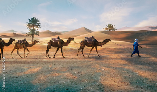 Berbers with Dromadaires in Merzouga Sahara desert on Morocco Wallpaper Mural