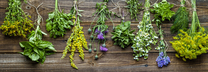 Panel Szklany Przyprawy Collection of herbs, fresh garden herb, banner