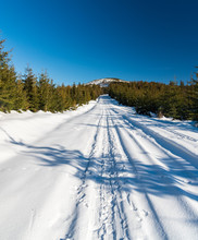 Snow Covered Road With Young Spruce Forest Around, Hill On The Background And Clear Sky In Winter Mountains