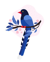Taiwan Azure Magpie. Animals O...