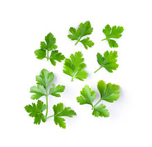 Fresh Parsley Herb Isolated On...