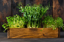 Microgreen Pea Sprouts On Old Wooden Table. Vintage Style. Vegan And Healthy Eating Concept.  Growing Sprouts. Selective Focus.