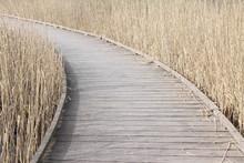 Pont De Bois Surplombant Un Marais