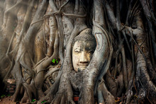Buddha Head In Tree Ayutthaya ...