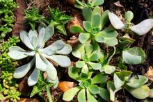 Succulent Plants Arrangement W...