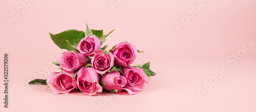 Carta da parati Pink Rose flower on pink background with copy space for text