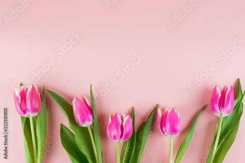 Fototapeta Pink tulip flower on blue wood table background with copy space for text. Love, International Women day, Mother day and Happy Valentine day concept obraz