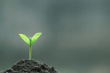 Plant Growth On Agriculture Ag...