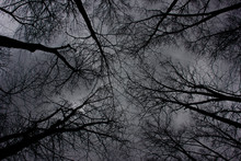 A Web Of Tree Branches While L...