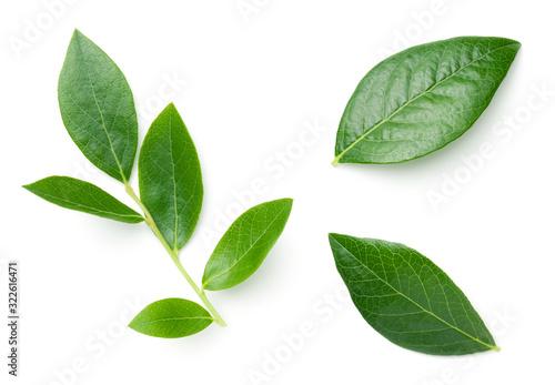 Obraz Blueberry Leaves Isolated On White Background - fototapety do salonu
