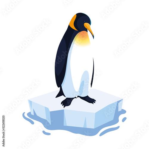 Fototapeta penguin on an ice floe drifting obraz