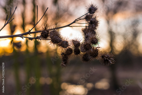 Vászonkép Old withered burdock, colorful, burdock seeds, abstract, tristess, winter