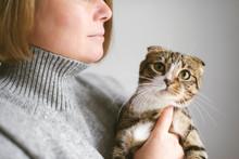 Woman Holding Beautiful Cat On...