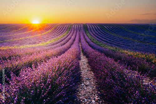 Blooming lavender field at sunset in Provence, France Canvas Print
