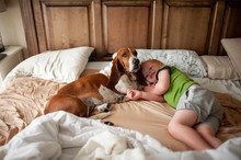 Toddler Boy Waking Up In Bed With Basset Hound Dog Next To Him At Home