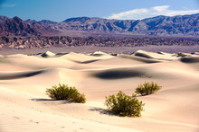 The Mesquite Flat Sand Dunes I...