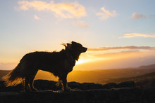 Sunset Silhouette Of Fluffy Dog